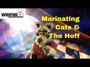 Wolfun TV - Marinating Cats, Roasting Hoff, and thanks for 200